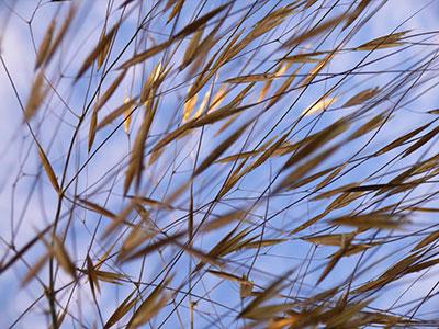grass sky more